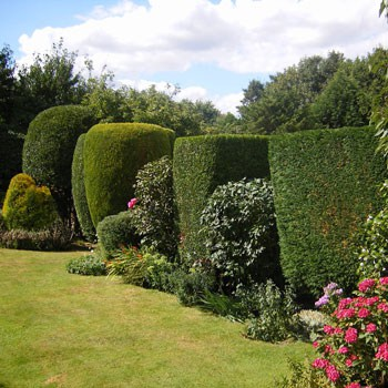 Ornamental Pruning Services