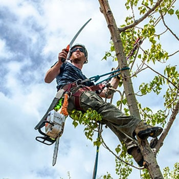 Tree Trimming Services